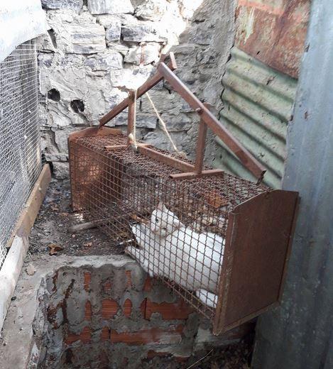 Gatto nella trappola per le faine