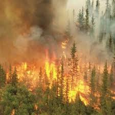 Incendi boschivi