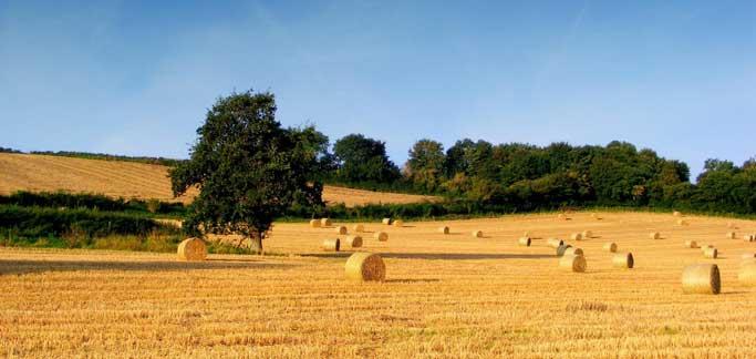 Agricoltura toscana (Foto da comunicato)