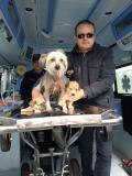 La cagna abbandonata alle Cascine con i suoi cuccioli nell'ambulanza dell'Enpa