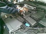 Foto dle gattino incastrato nel motore di un' automobile