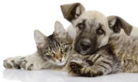 Tutela e benessere animale (fonte foto sito Regione)