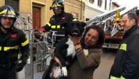 Il cane con la padrona e i vigili dopo il recupero