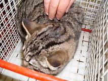 Deteneva 34 gatti nell'appartamento in una situazione di degrado sociale