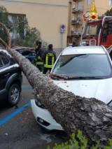 Albero caduto in via Di Vittorio a Pontassieve