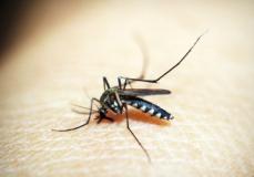 Lotta biologica contro le zanzare