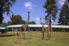 le giraffe al meyer