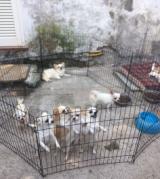 Cuccioli rinvenuti nel pratese