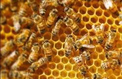 Presente e futuro dell'apicoltura