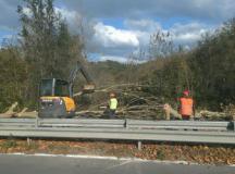 Taglio di alberi sulla provinciale 106