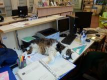 Oreste e i volontari del gattile giochiamo insieme youtube