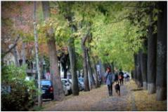 Alberi, al via i lavori di sistemazione dei filari e delle aiuole di via Perfetti Ricasoli