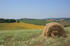 Maremma, campo di grano (foto da comunicato)