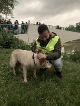 La cagnolina salvata (foto da comunicato)