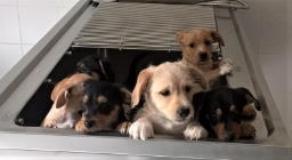 Una struttura moderna per la gestione e la tutela degli animali (fonte foto comunicato stampa)