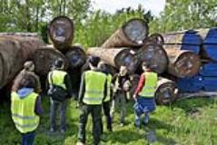 Studiare il legno per l'arredo e l'edilizia