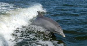 Delfini spiaggiati, confermato CeMv (foto da comunicato)