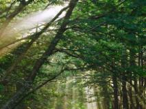 Immagine dal sito del Parco delle Foreste casentinesi