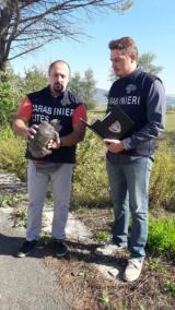 Ritrovato a Scandicci un bellissimo esemplare di tartaruga sarda e consegnato ai Carabinieri Forestali