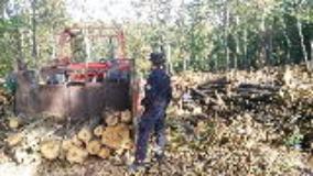 Controlli dei Carabinieri Forestali e del NIL nei cantieri forestali