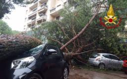 Il pino caduto sulle auto in via Campana
