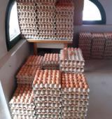 Le uova sequestrate