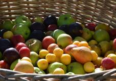 Frutta al Parco Frutteto San Jacopo