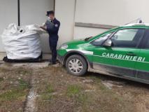 Un momento del controllo (Fonte Foto Carabinieri Forestali)