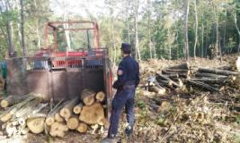 Controlli dei carabinieri forestali sul lavoro nei boschi