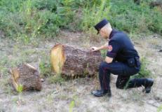 Carabiniere Forestale