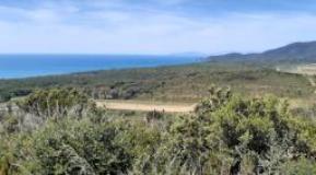 Una webcam sulla costa di Castiglione della Pescaia (Gr)