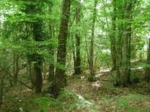 Area boschiva soggetta a vincolo idrogeologico